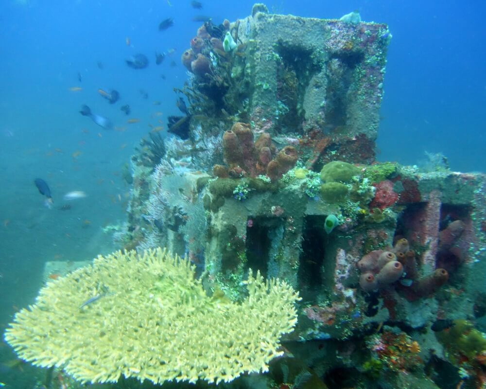 Amed diving day trip