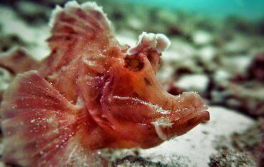 Padang Bai underwater treasure
