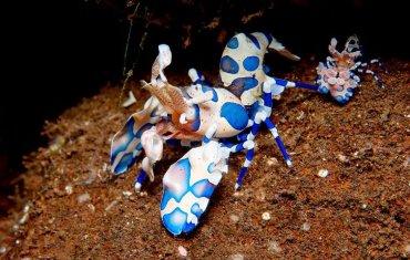 Tulamben incredible wildlife