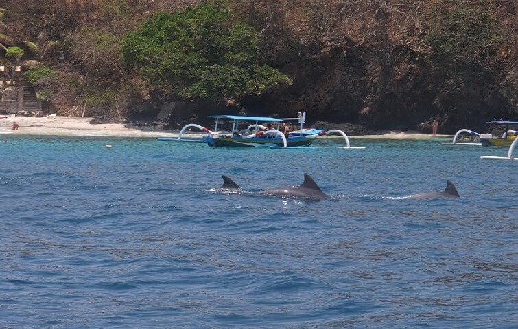 Dolphins watching during a diving trip in Bali