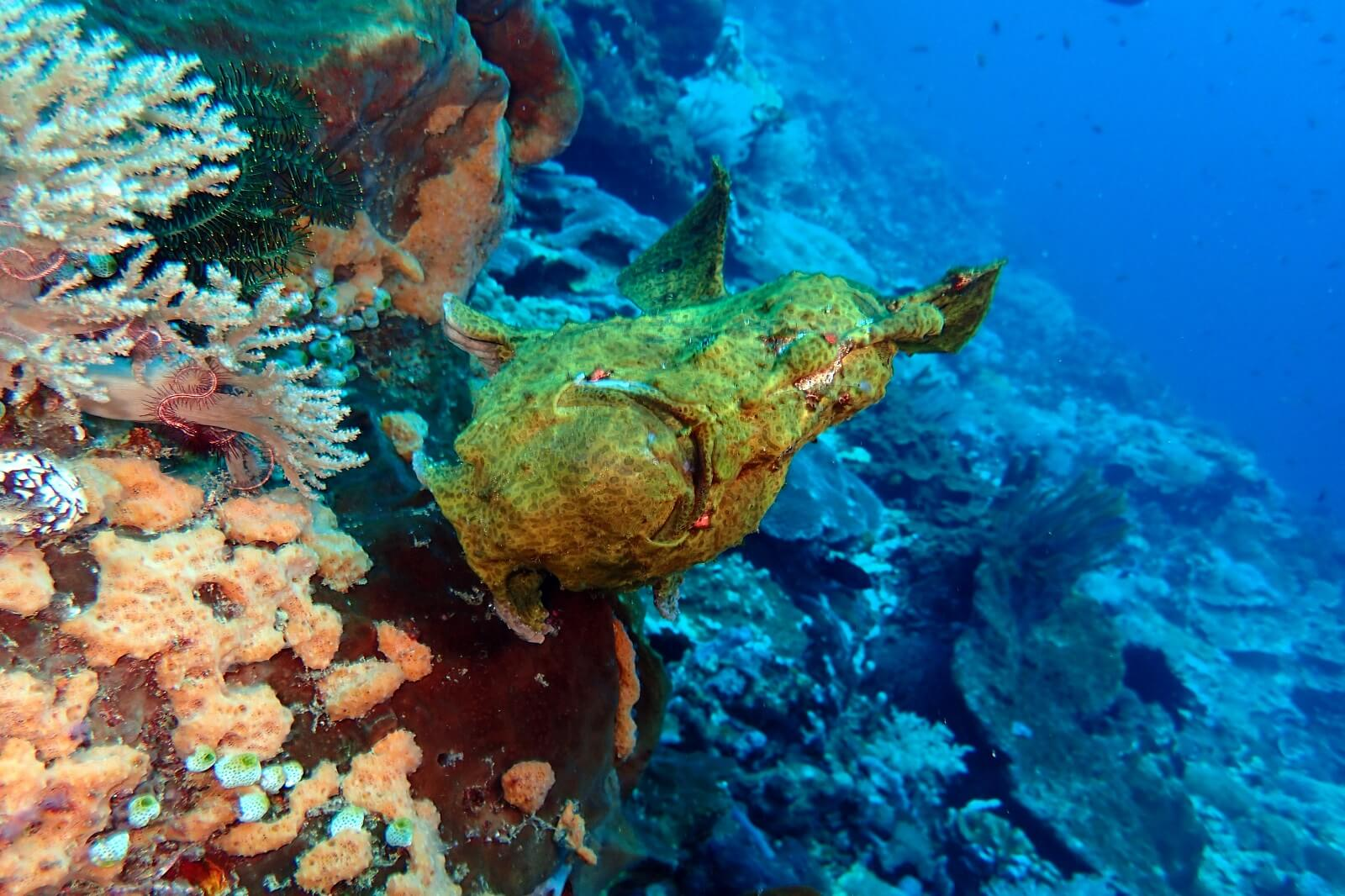 Nusa Penida diving day trip
