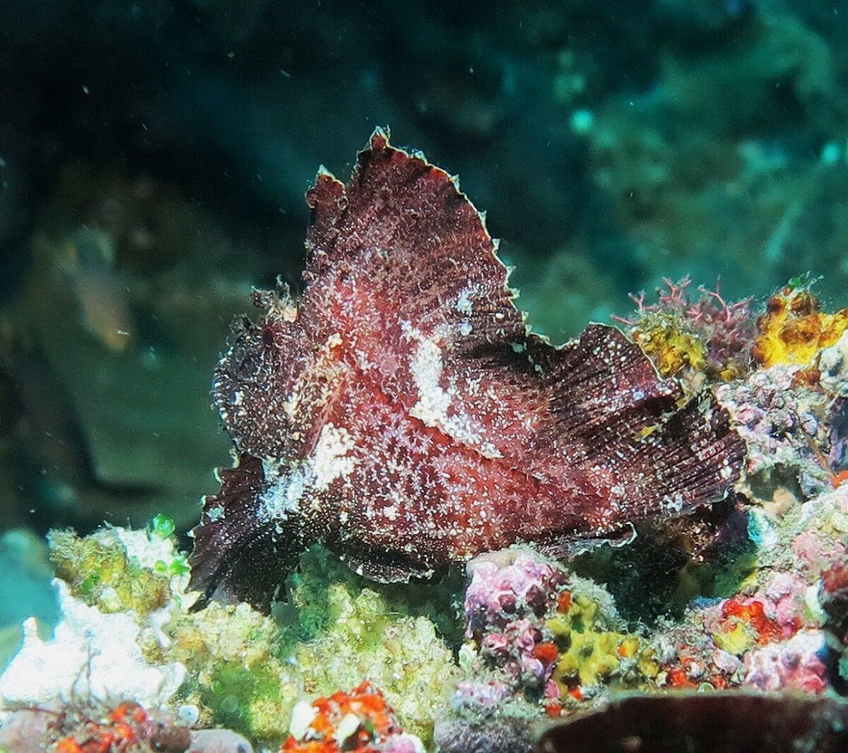 Tulamben beautiful marine life