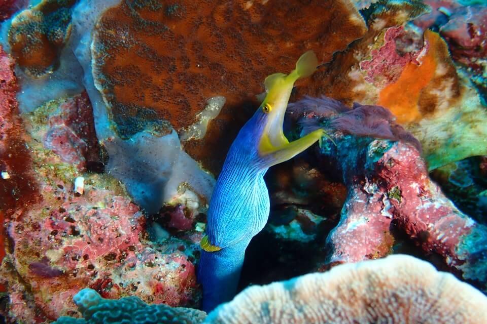 Tulamben Dive Photography