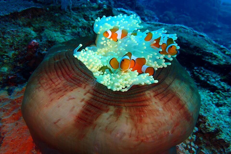 Little Nemo in Tulamben