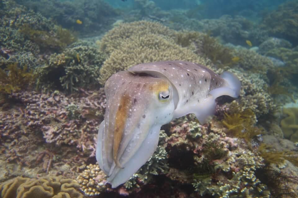 Penjor Reef dive spot in Sanur
