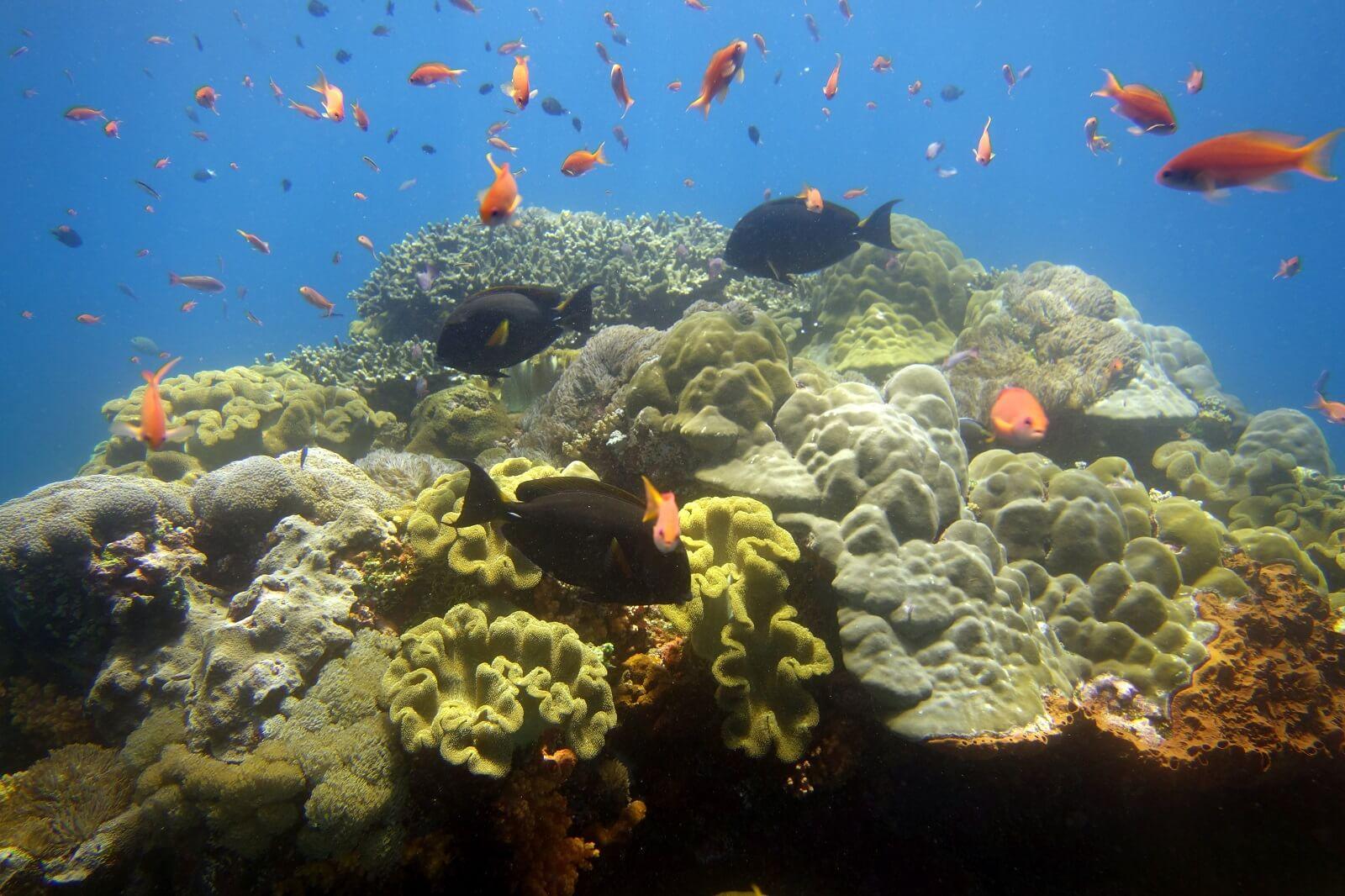 Toayapake, Nusa Penida dive spot