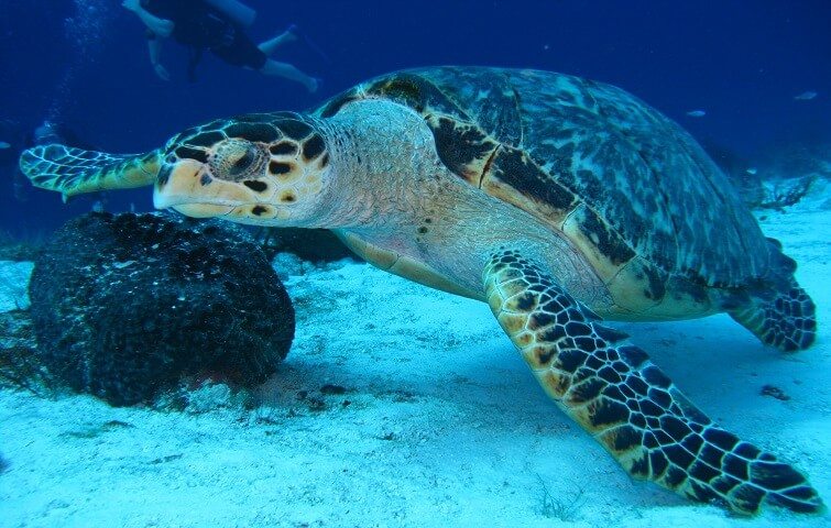 Swim with turtles in sunny Bali with Nico Dives Cool Bali