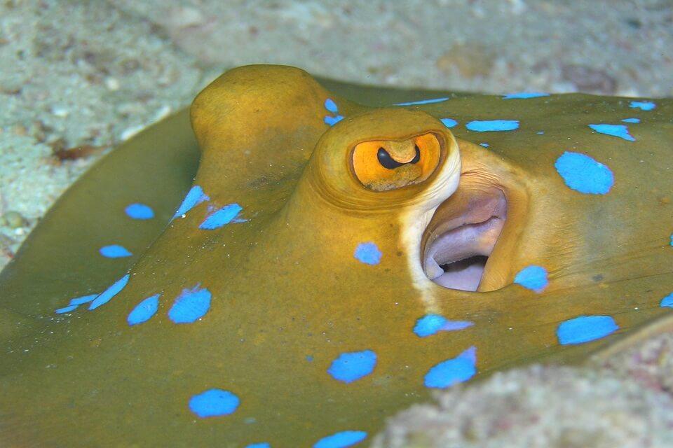Bunutan dive spot in Amed amazing underwater life