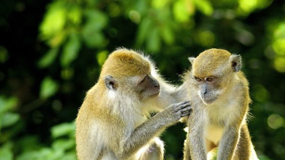 Diving safari in Bali-stop at Monkey forest in Ubud