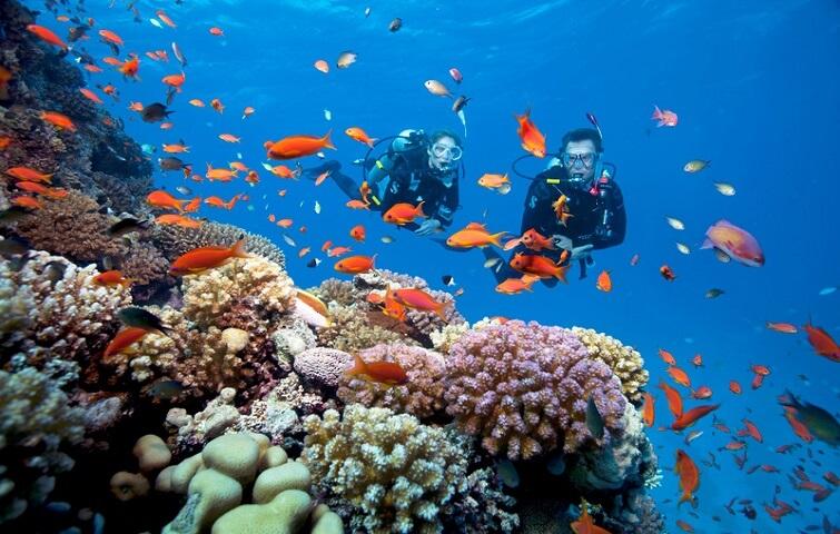 Magnificient Menjangan Diving Package